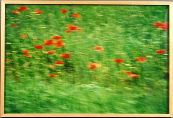 3030: ANNETTE LEMIEUX 'DRIVE BY POPPIES', Ltd E. PHOTO