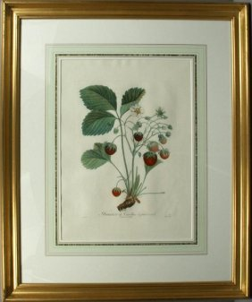 FRAISLER DECAROLINE A FRUIT ROND, STIPPLE, 1780
