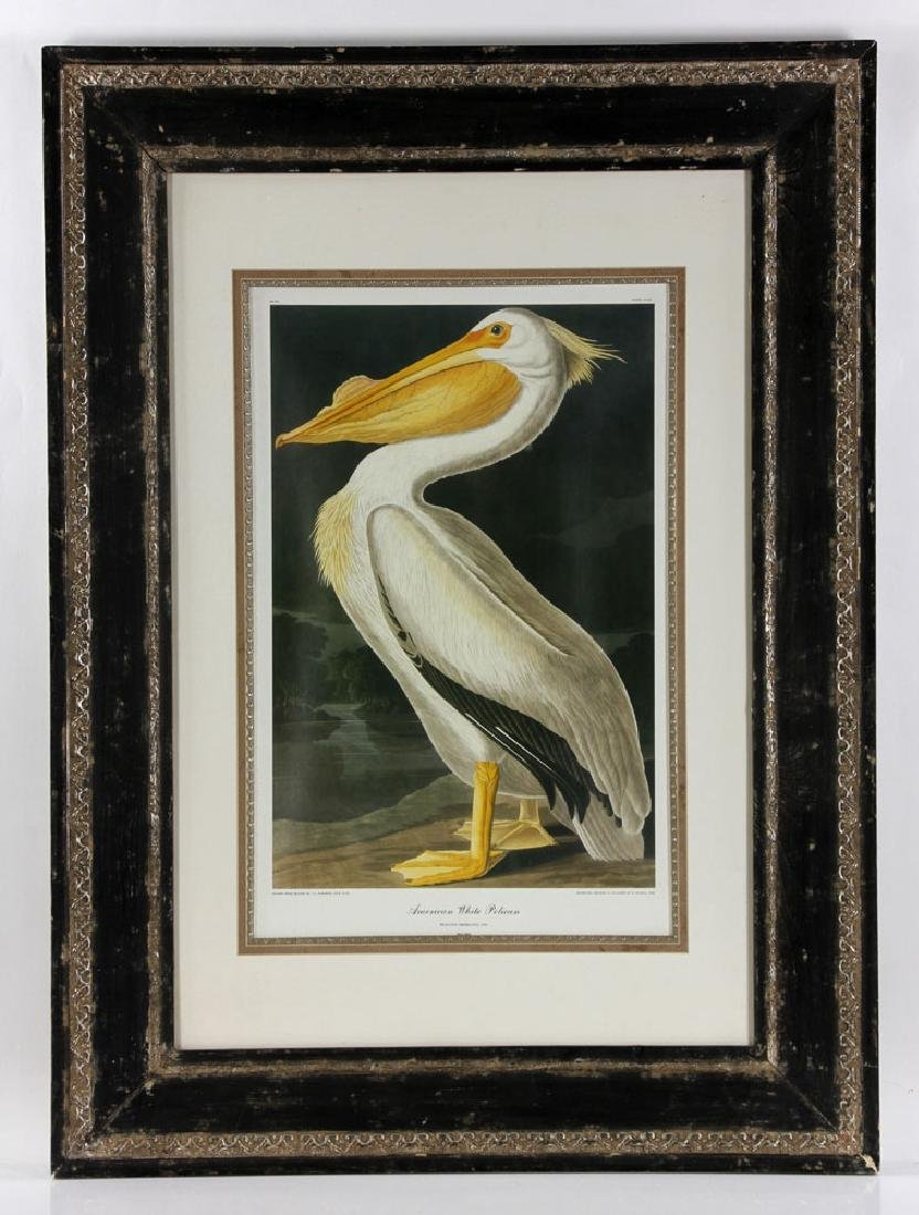 After Audubon, American White Pelican, Offset Litho