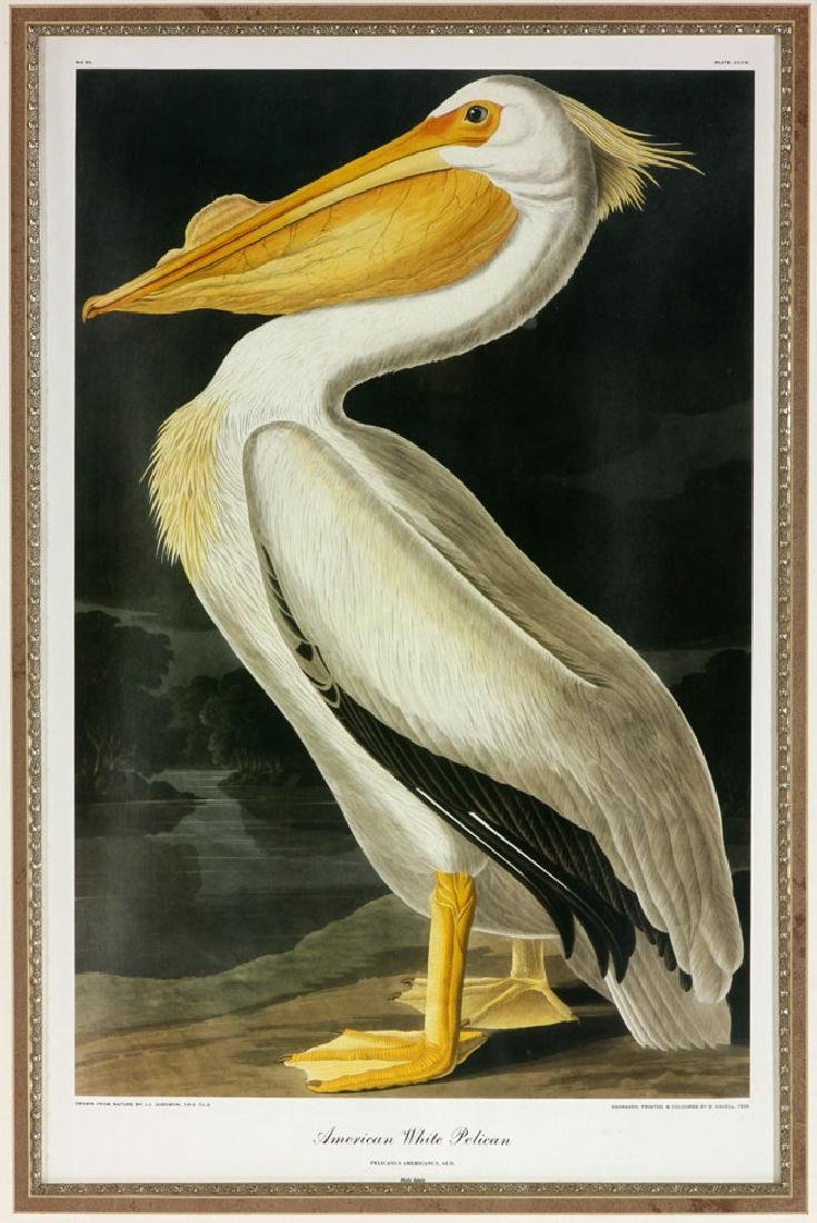 After Audubon, American White Pelican, Offset Litho - 2