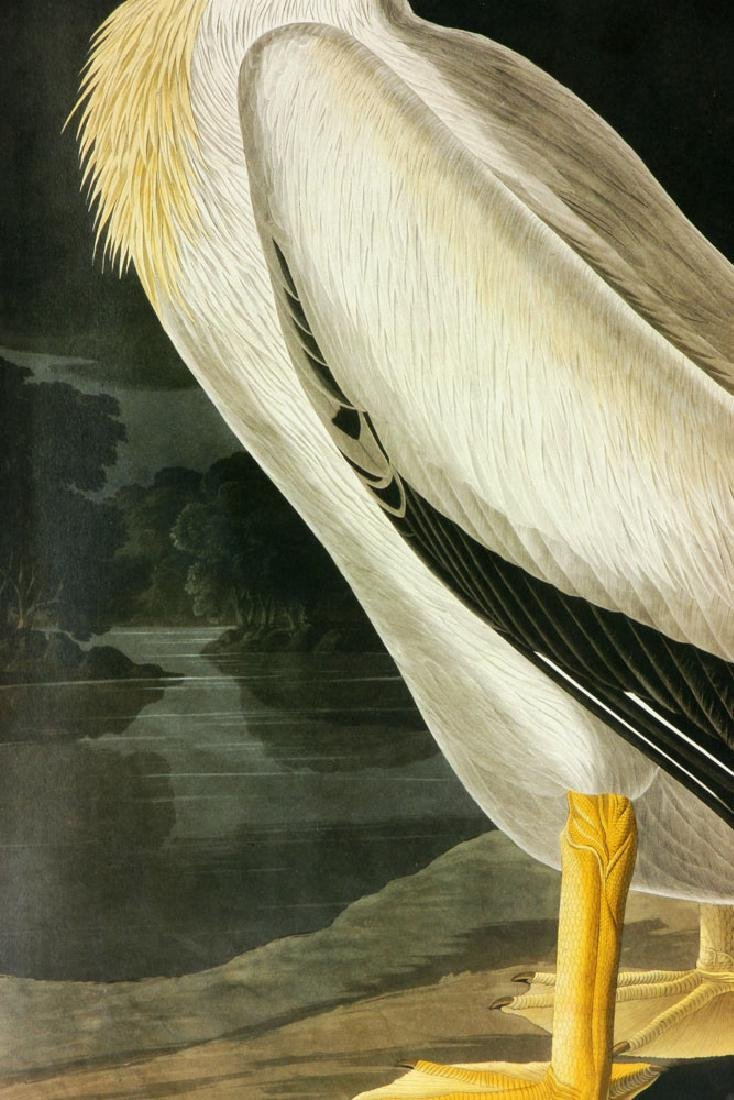 After Audubon, American White Pelican, Offset Litho - 4