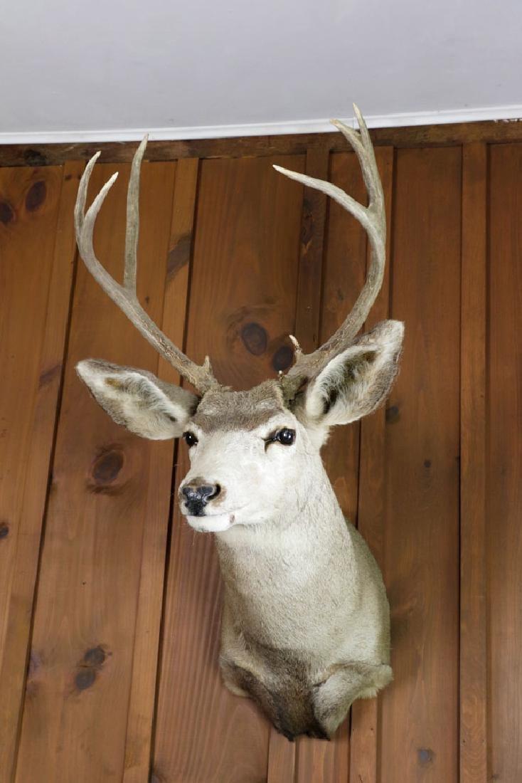 Lot of (2), Deer Head Trophy & Taxidermy Pheasant - 3