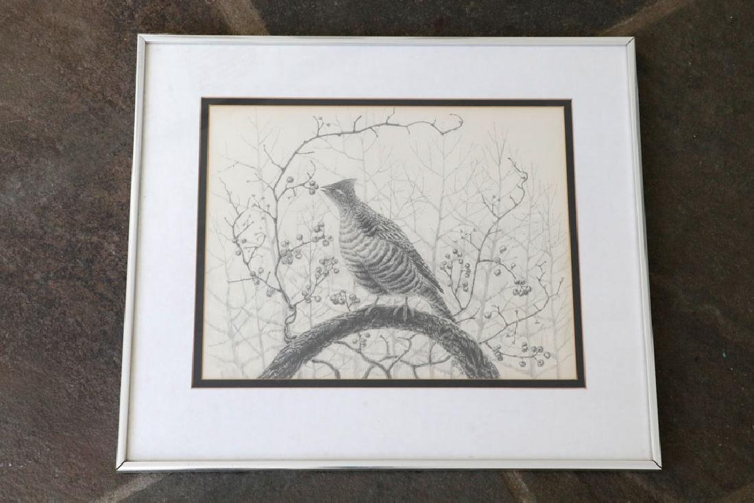 Drawing of Grouse on Branch