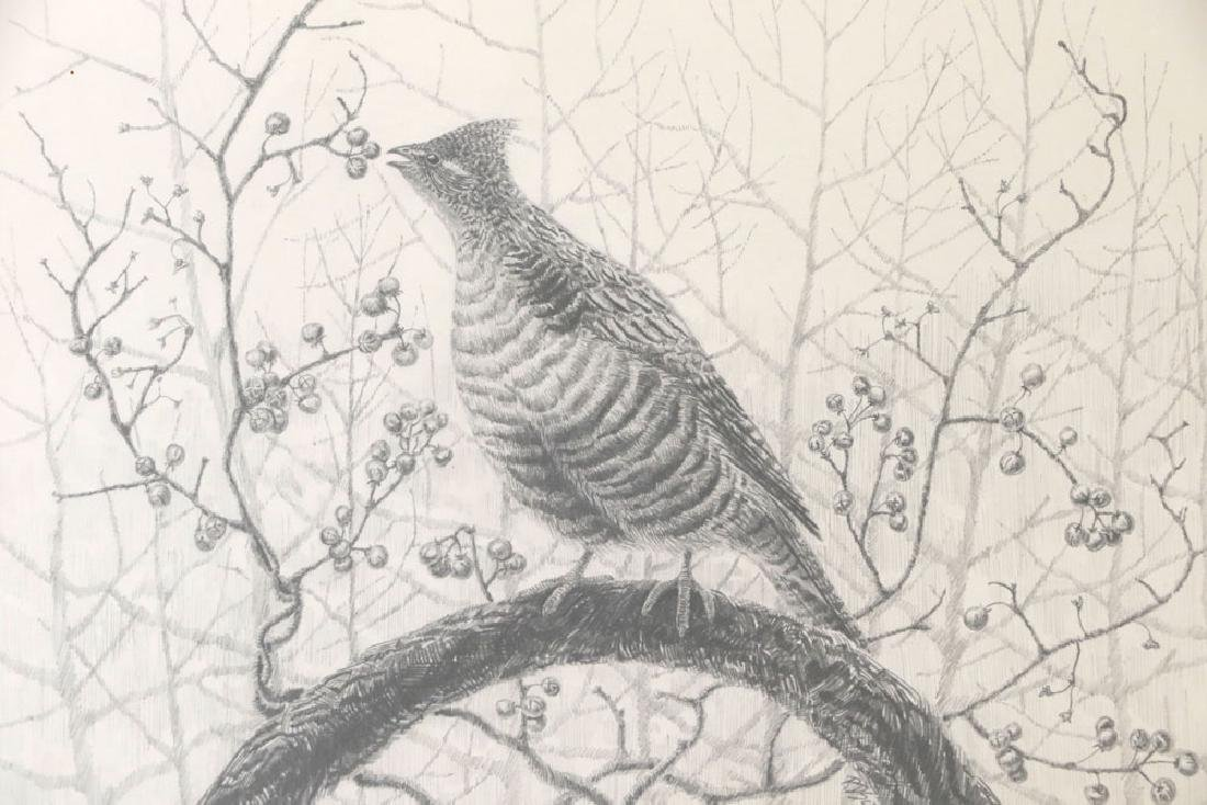 Drawing of Grouse on Branch - 2