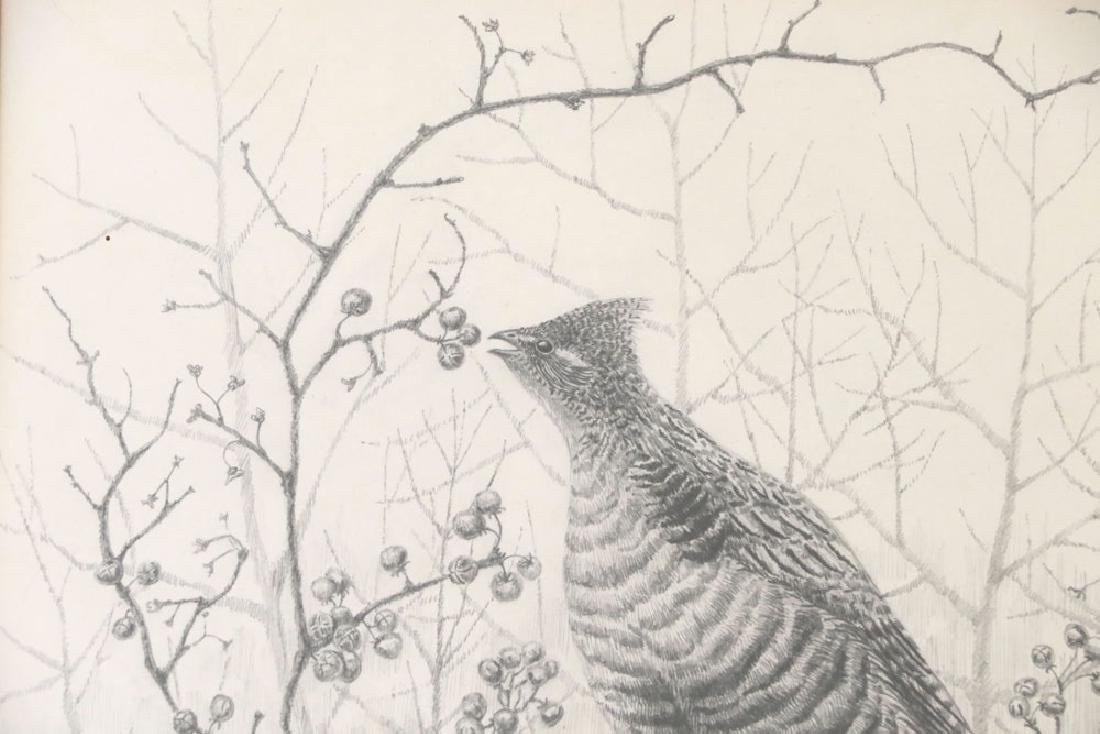 Drawing of Grouse on Branch - 4