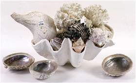 Large Vintage Shell & Coral Collection