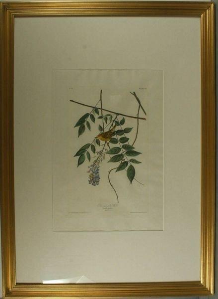 6: AUDUBON,P95,YELL. WARBLER,AQ,HC ENGR,1827-38