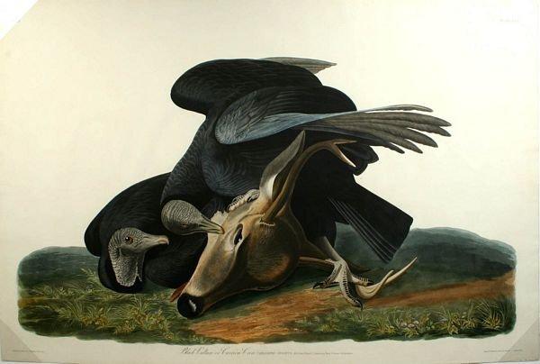 7: AUDUBON,P10,BLACK VULTURE,AQ,HC ENGR,1827-38