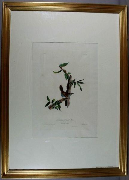 23: AUDUBON WREN, AQUATINT ENGR W/HC,C.1826-38