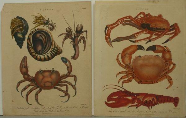 1021: CRABS & LOBSTER (2), HAND COLOR ENGR.,C.1800