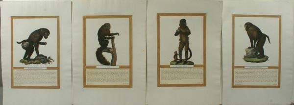 1022: MONKEYS (4), HAND COLOR ENGRAVING, C.1812