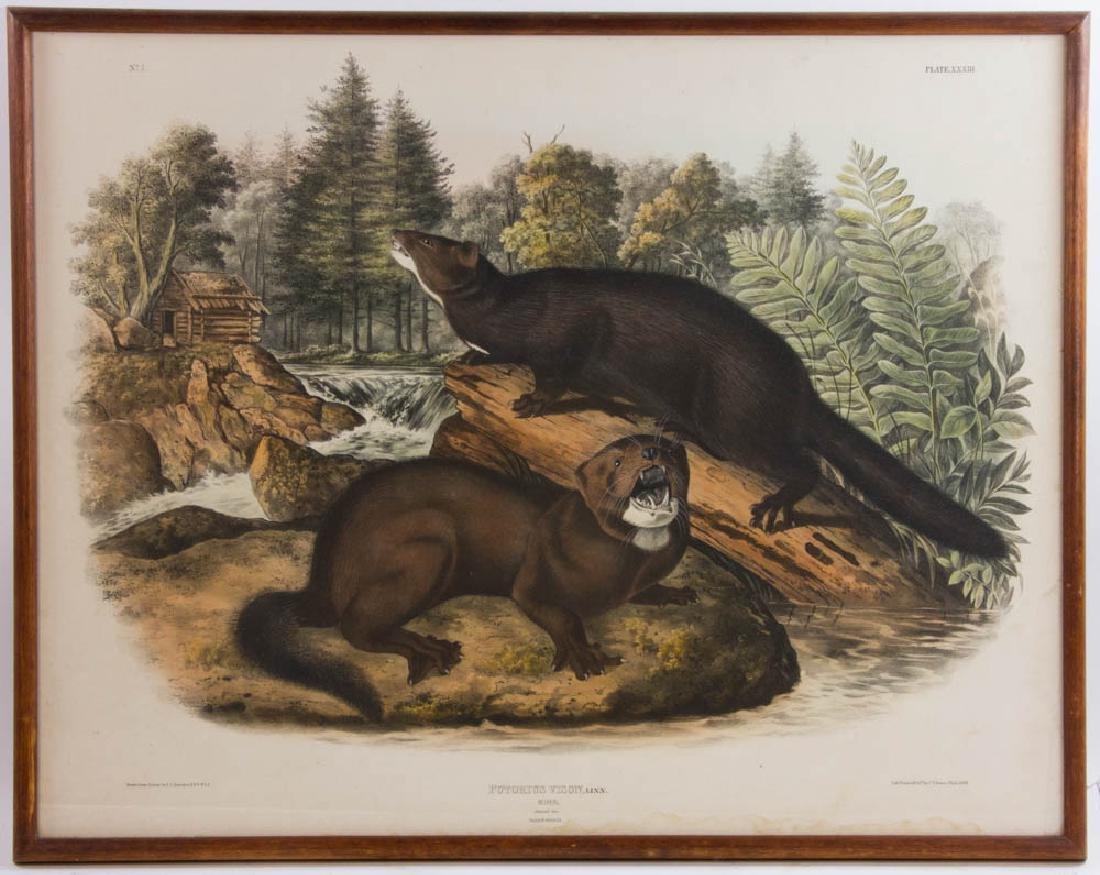John J. Audubon, Mink, Hand Colored Litho