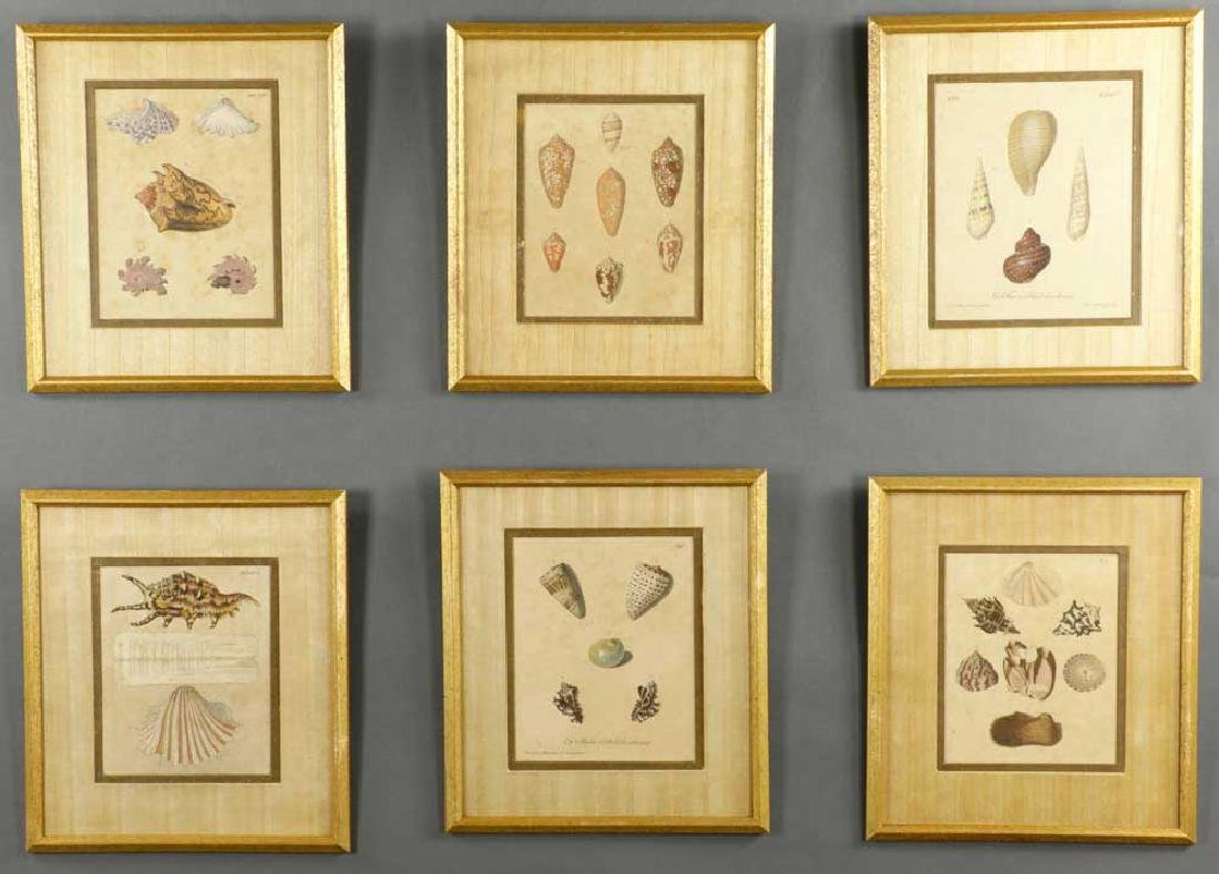 Set of (6) 19th C. Engravings of Seashells