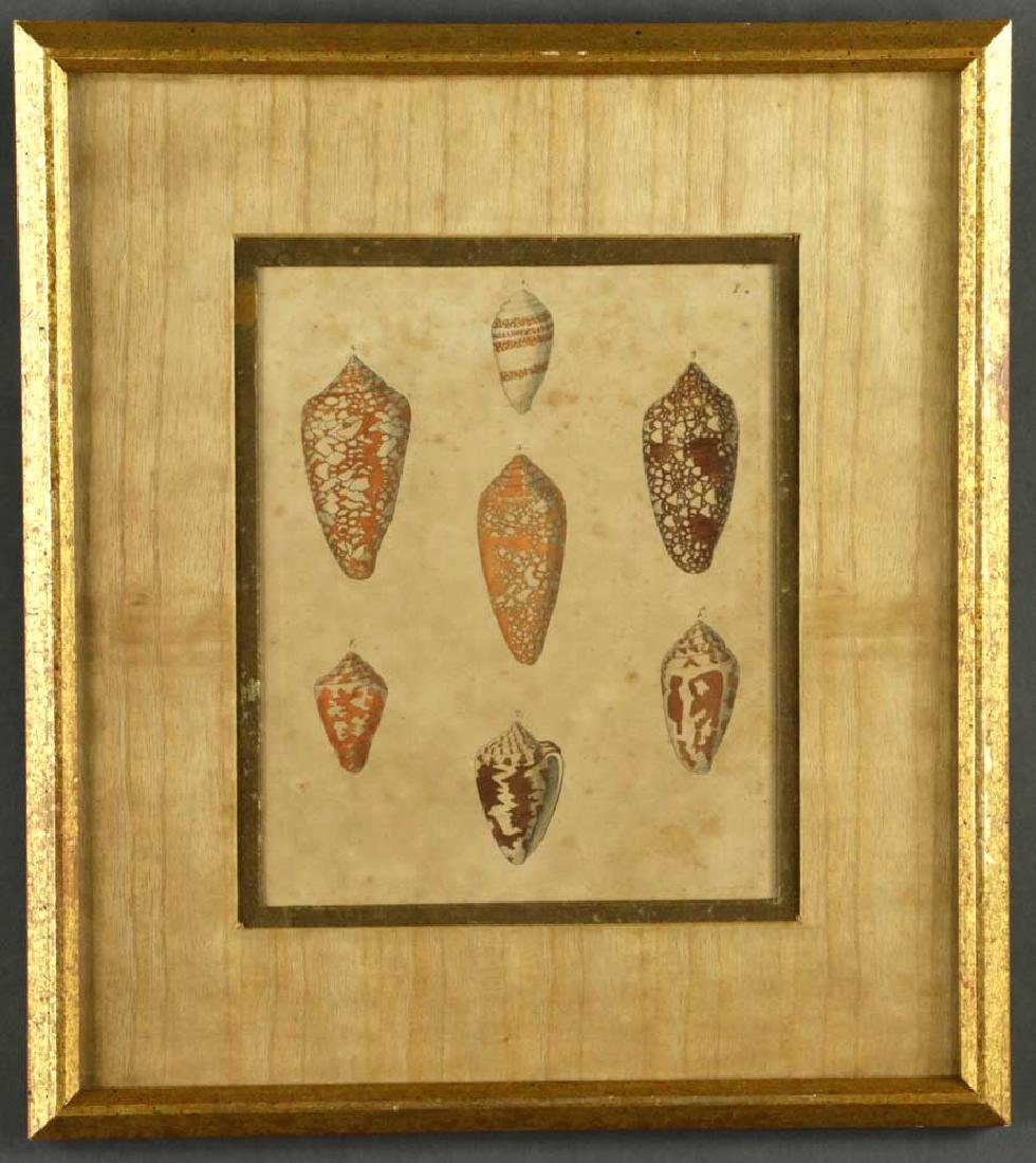 Set of (6) 19th C. Engravings of Seashells - 3