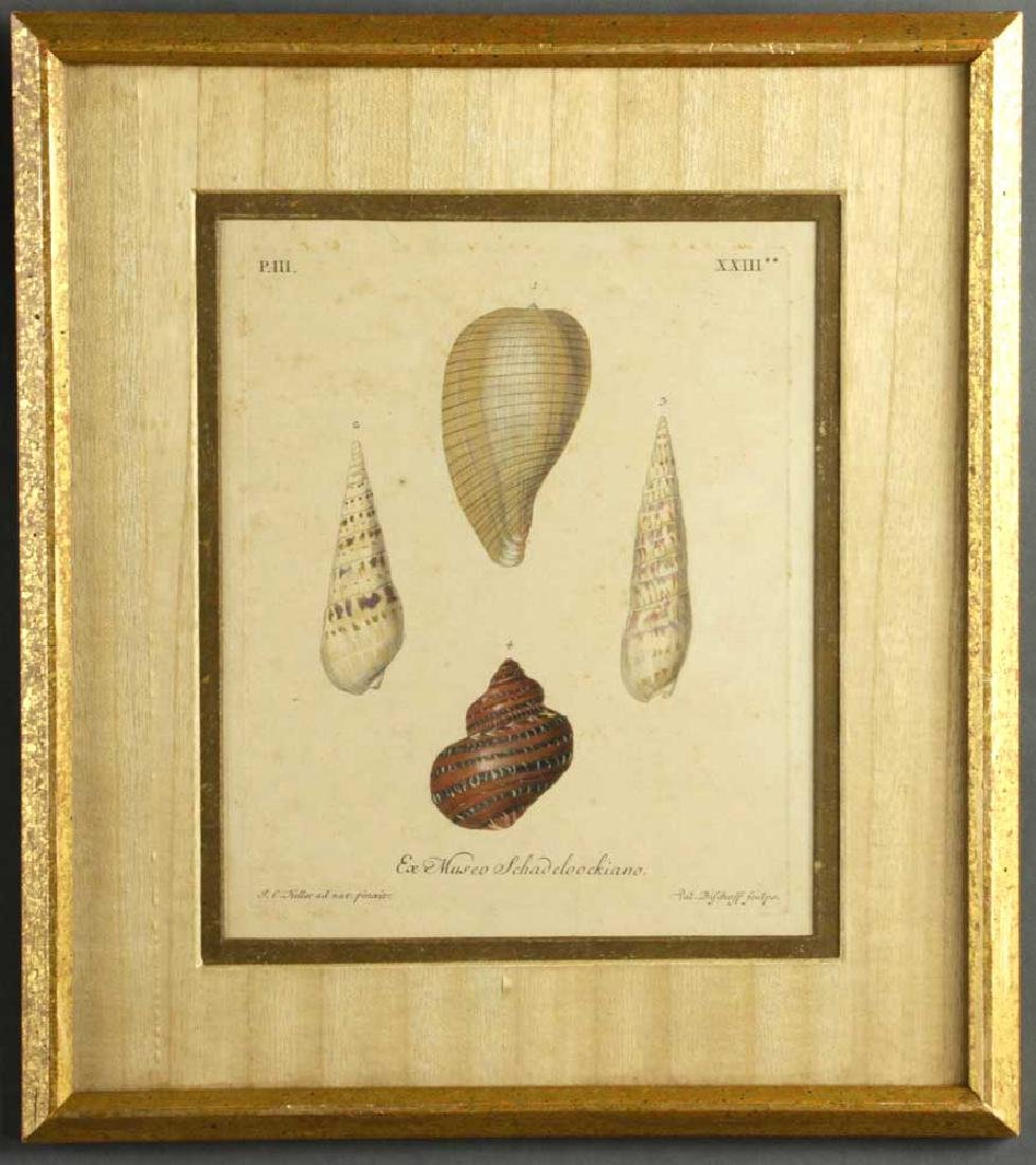 Set of (6) 19th C. Engravings of Seashells - 4