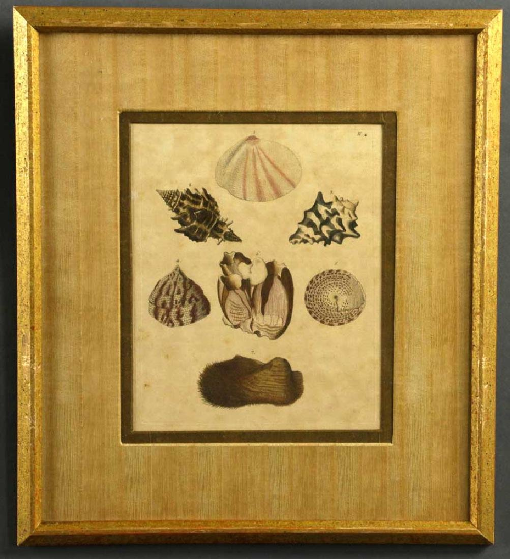 Set of (6) 19th C. Engravings of Seashells - 5