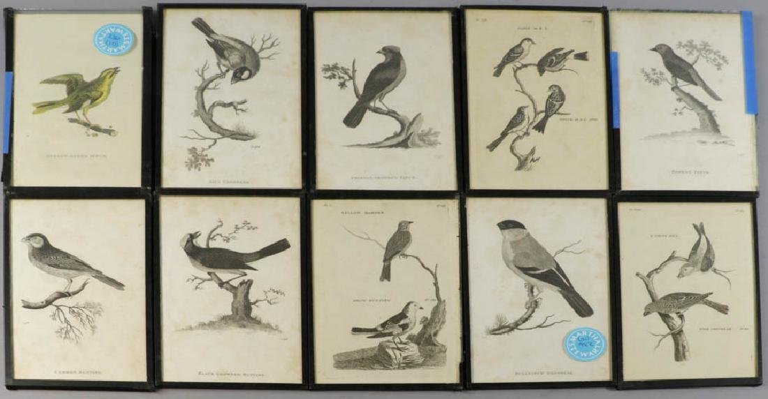 Circa 1817 Engravings of Birds