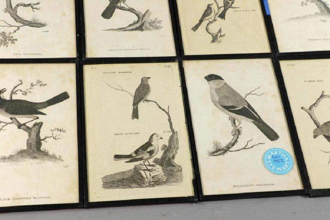 Circa 1817 Engravings of Birds - 2