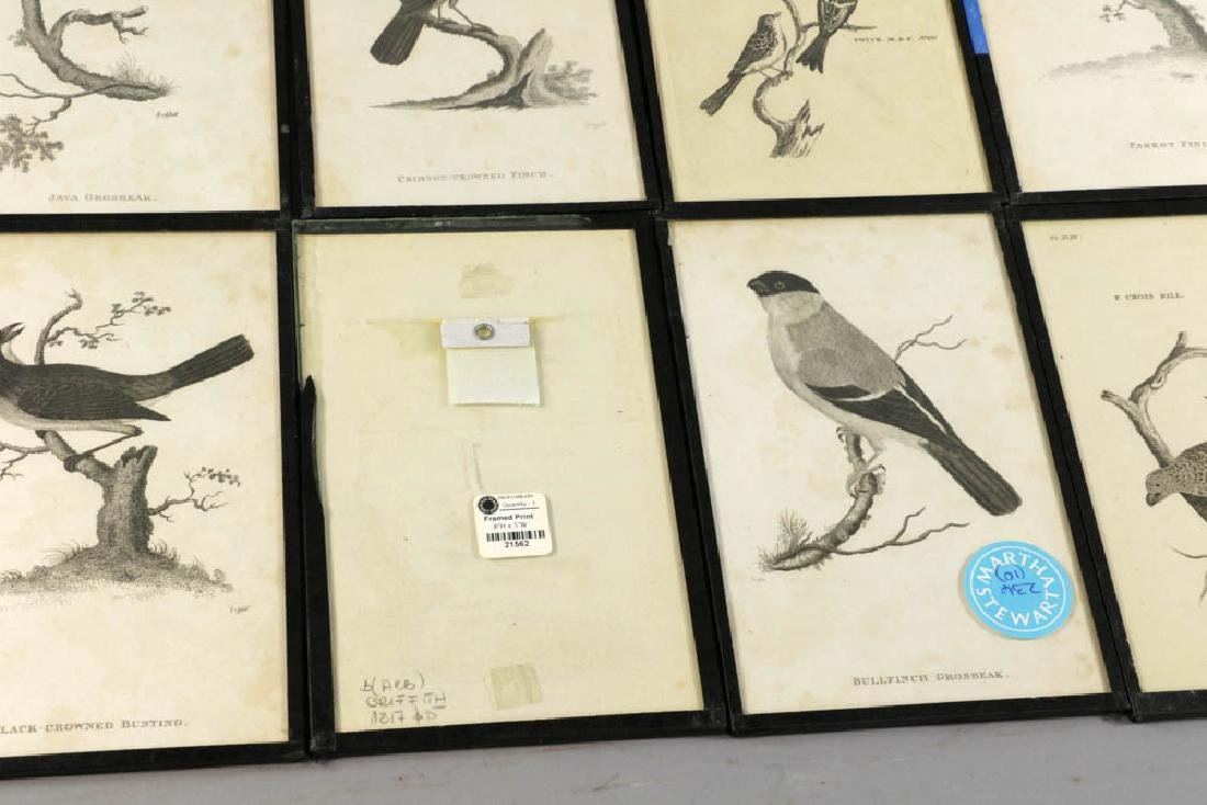 Circa 1817 Engravings of Birds - 3