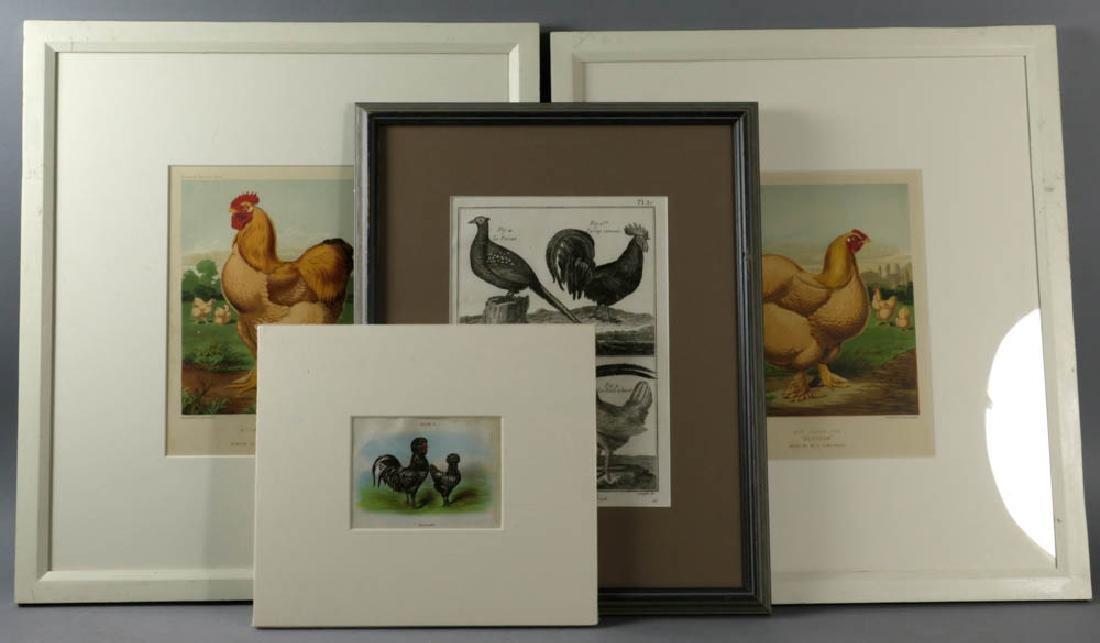 Antique Chicken Lithographs