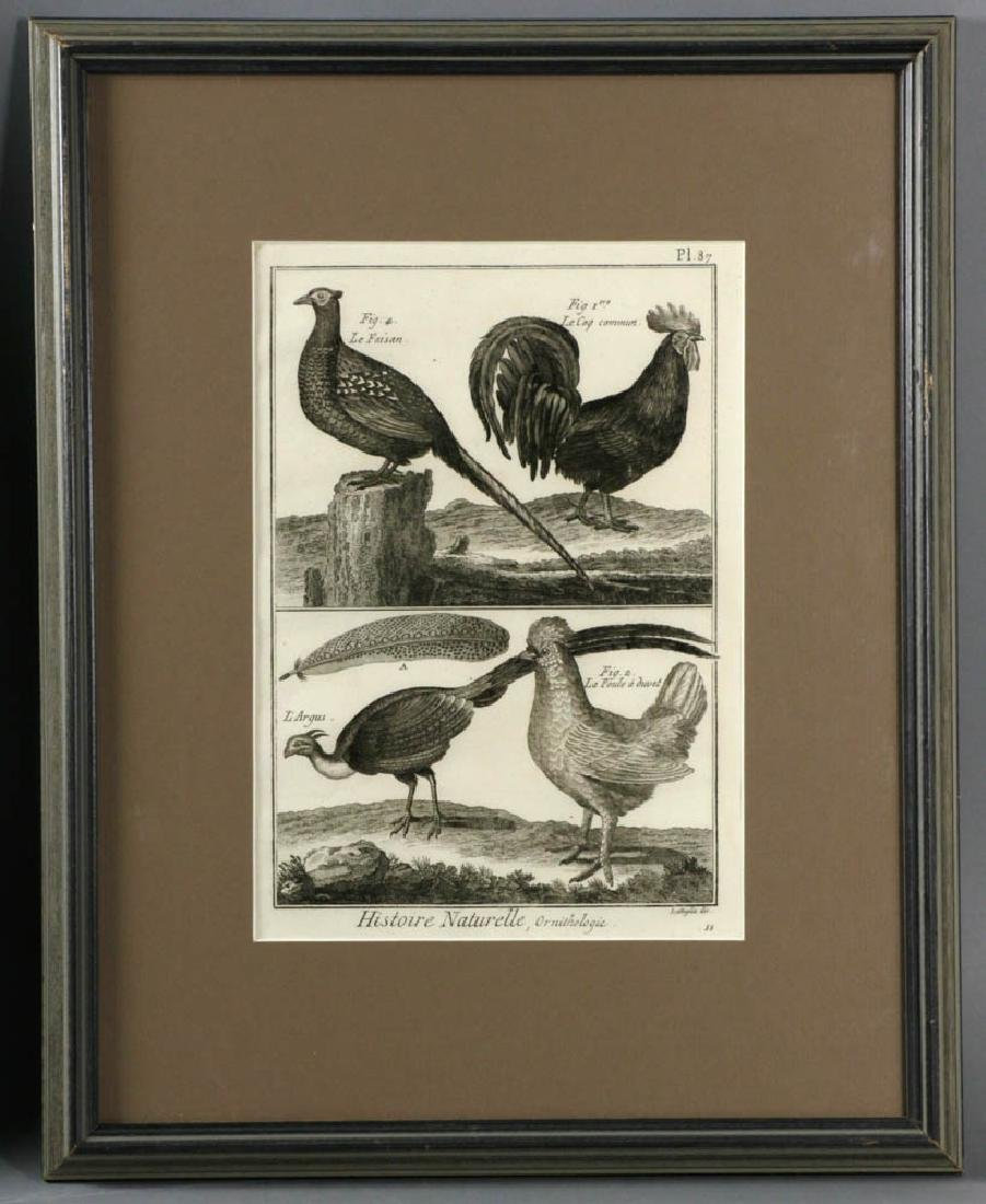 Antique Chicken Lithographs - 2