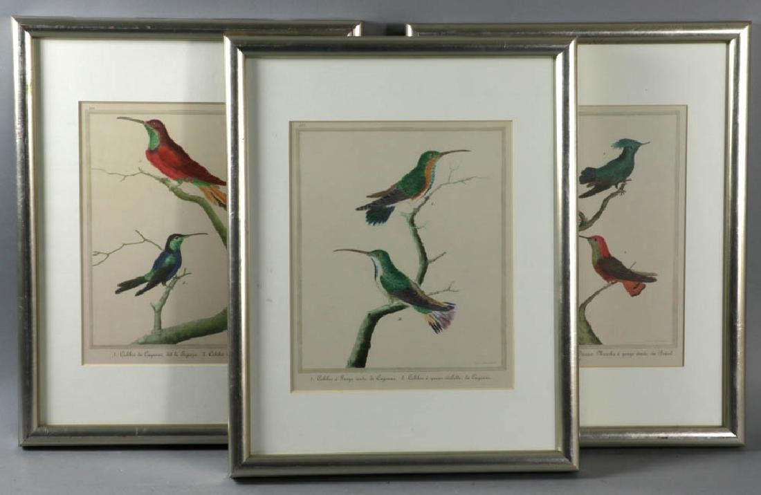 Framed Ornithological Prints