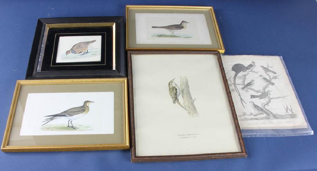 Five Ornithological Prints