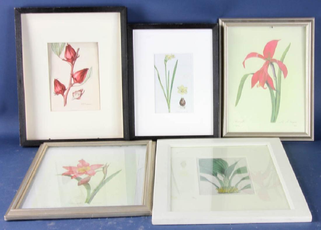 Five Framed Botanical Prints
