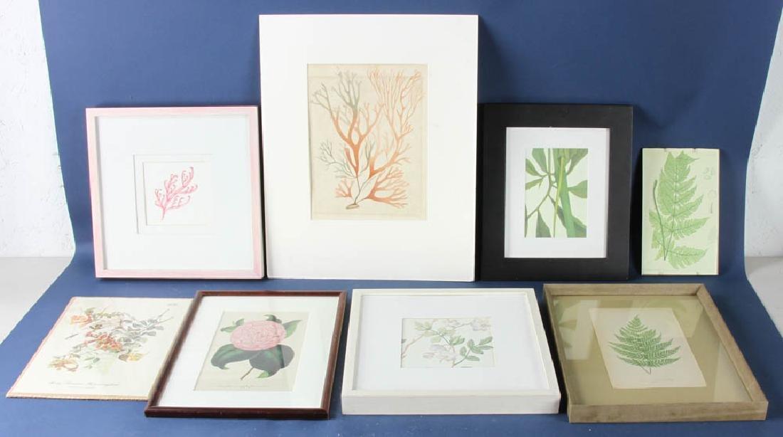 Eight Botanical Prints