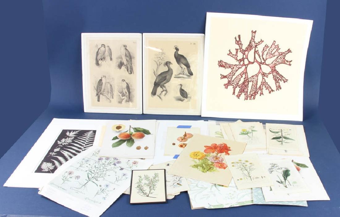 Group of Unframed Prints