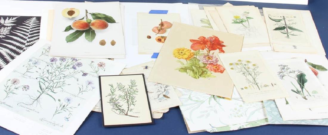 Group of Unframed Prints - 2
