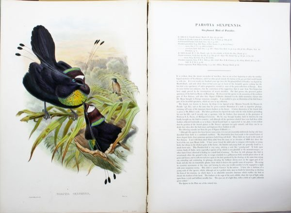 2004: Gould & Hart, Parotis Sexpennis, HC Lithograph