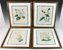 Set of Hand Colored Botanical Prints