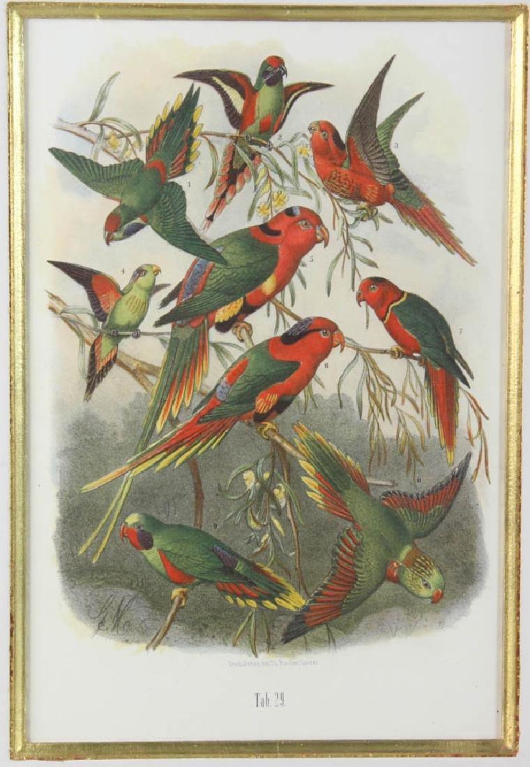 Four Antique Colored Prints of Birds - 2