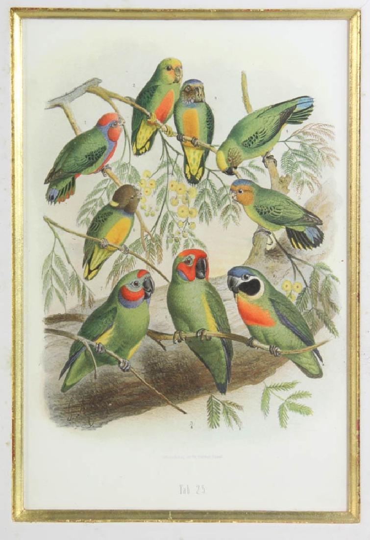 Four Antique Colored Prints of Birds - 3