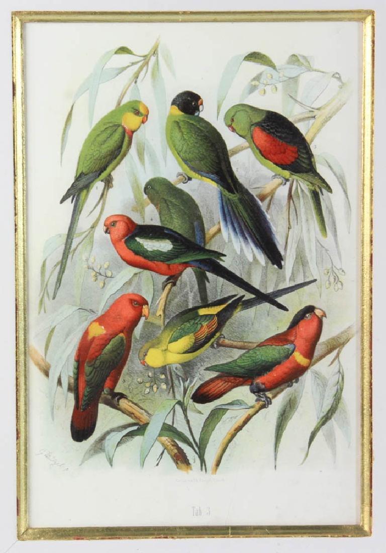Four Antique Colored Prints of Birds - 4