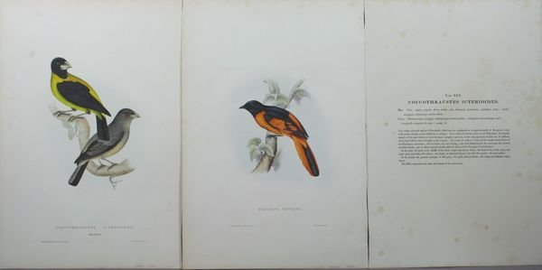 1018: E. Gould and J. Gould, A Pair of Bird Prints