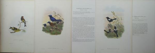 1019: J. Gould, E. Gould, and W. Hart, Bird Prints""