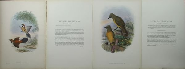 1023: J. Gould and W. Hart, A Pair of Bird Prints