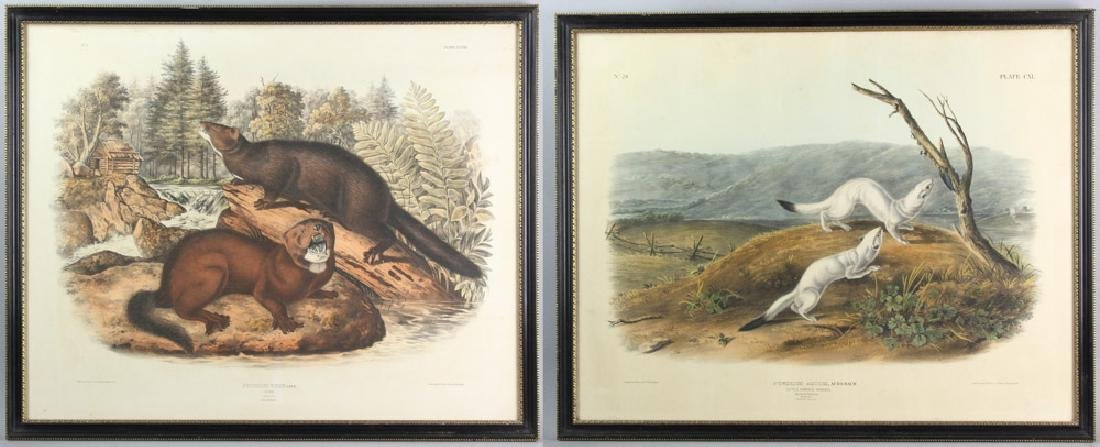 Two J. J. Audubon Prints, Weasel and Mink