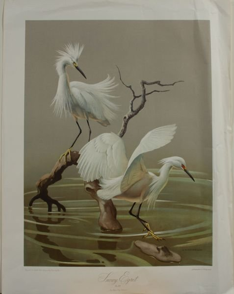 "4379: Litho Print ""Snowy Egret"", Roger Tory Peterson"