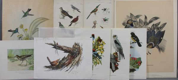 2011: Group of (9) Ornithological Bookplate Prints