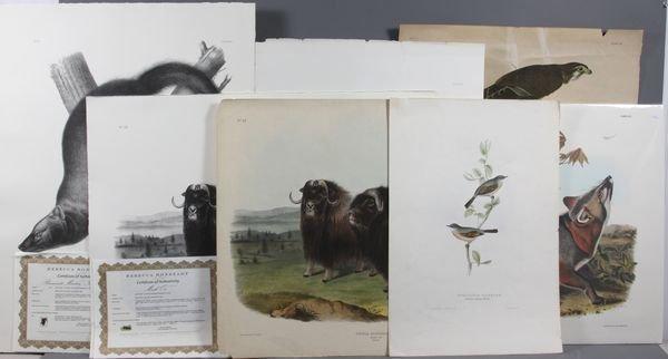 2024: (7) Prints, Six J.J. Audubon, One John Gould