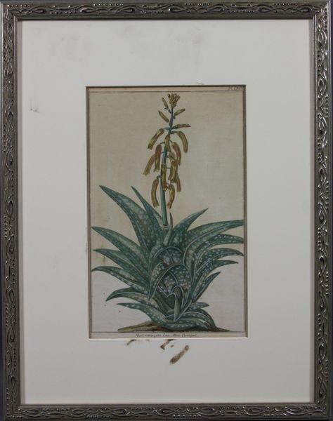 5: 19th Century Handcolored Botanical Print