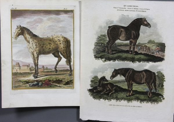 5015: (2) HC Engravings, Horses, C1840 and C1789
