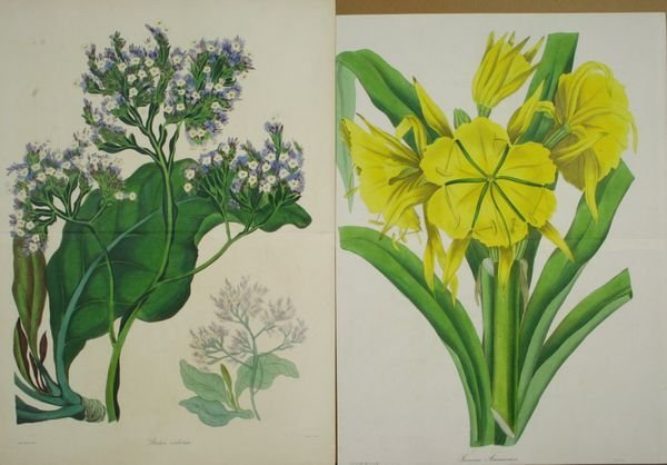 6020: (2) 19th C. HC Copper Plate Engravings, Flowers
