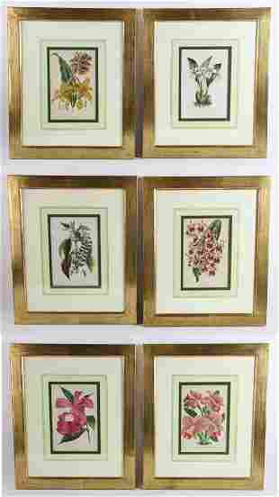 Set of Floral Lithographs, Horto Van Houtteano