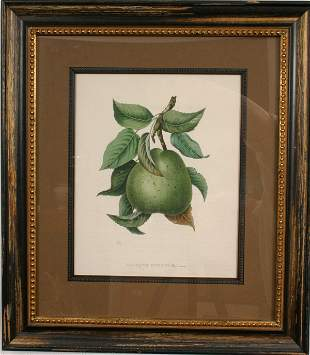 EARLY 19TH CENTURY FRENCH HAND-COLORED ENGRAVING