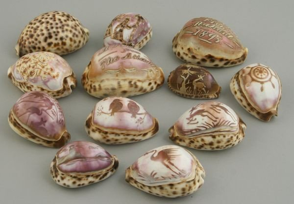 8005: Collection of Twelve (12) Cameo Carved Shells