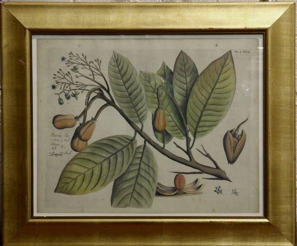 4003: Botanical Print